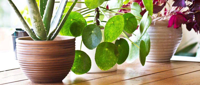 Huis vol planten: de allerbeste plek voor je kamerplanten