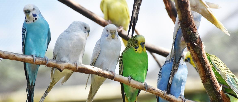 Aanschaf van een vogel