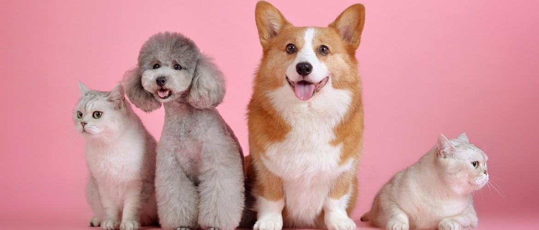 Huisdieren en corona