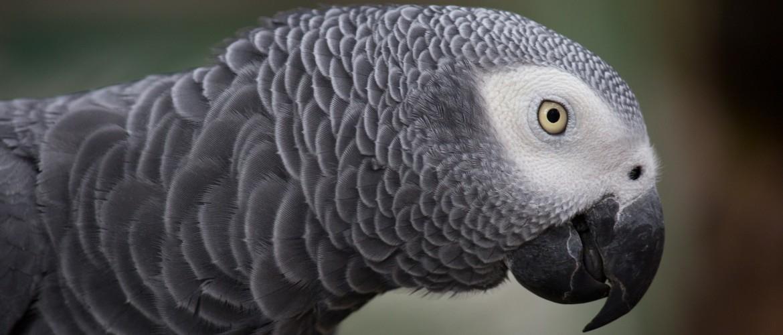 Het belang van calcium bij vogels