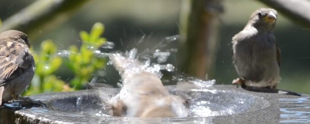 Badderende vogeltjes van dichtbij