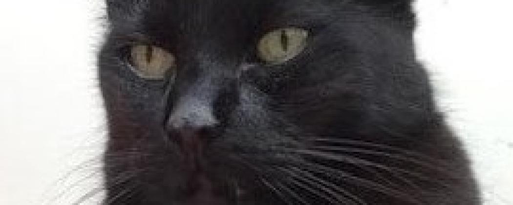 Dierentolk Marjon in gesprek met: een kat.