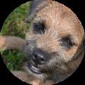 Deelnemer Opleiding tot Voedingsadviseur voor honden geeft feedback