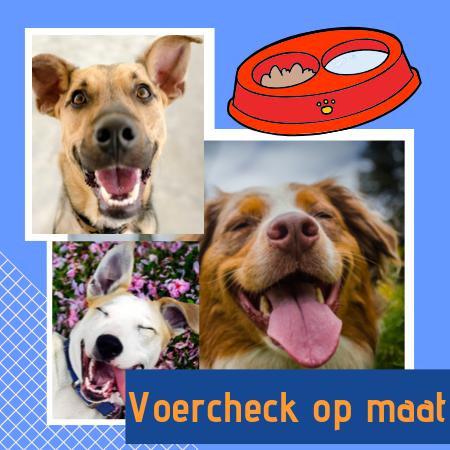 Voercheck: ontdek of het voer dat je nu geeft geschikt is voor je hond of kat