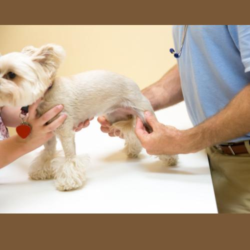 Honden krijgen vaak last van hun lichaam, van gewrichten. Bij sport en spel