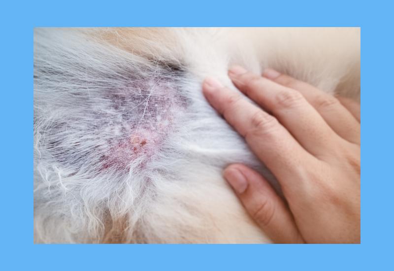 allergie, intolerantie en huidklachten bij je hond