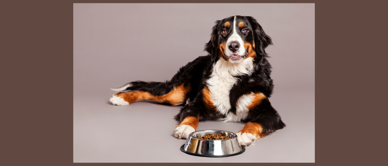 Mijn hond wil niet eten, wat nu?