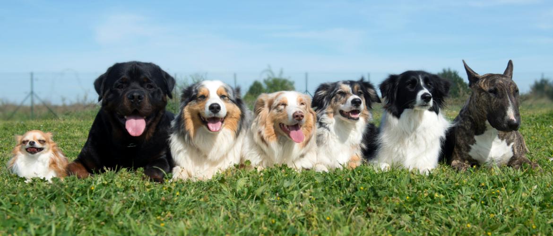 Hondenpension: doen of niet?