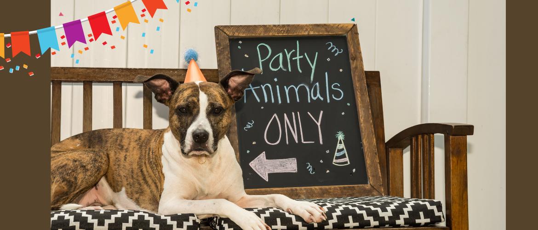 Jarig of iets te vieren...  en: ondanks alles toch wat feestelijkheid?