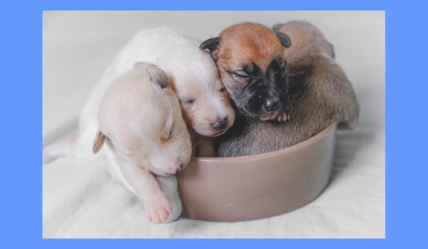 Orale tolerantie bij honden wordt ontwikkeld vanaf 4 weken