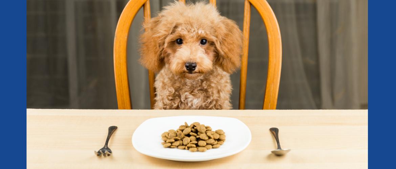 Mag ik brokken en vlees mixen voor mijn hond?