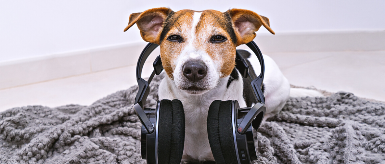 Muziek voor je hond: ontspanning bij stress of alleen zijn