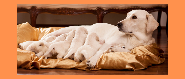 Orale tolerantie bij honden