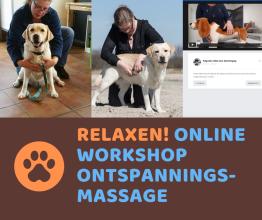 Ontspanningsmassage voor de hond: online workshop