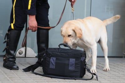 Speuren en Detectiewerk zoals een professionele detectiehond