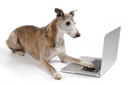 Online hondenschool, trainen met je hond vanuit je eigen stoel: op internet krijg je toegang tot het programma van DigiDog hondentraining Online