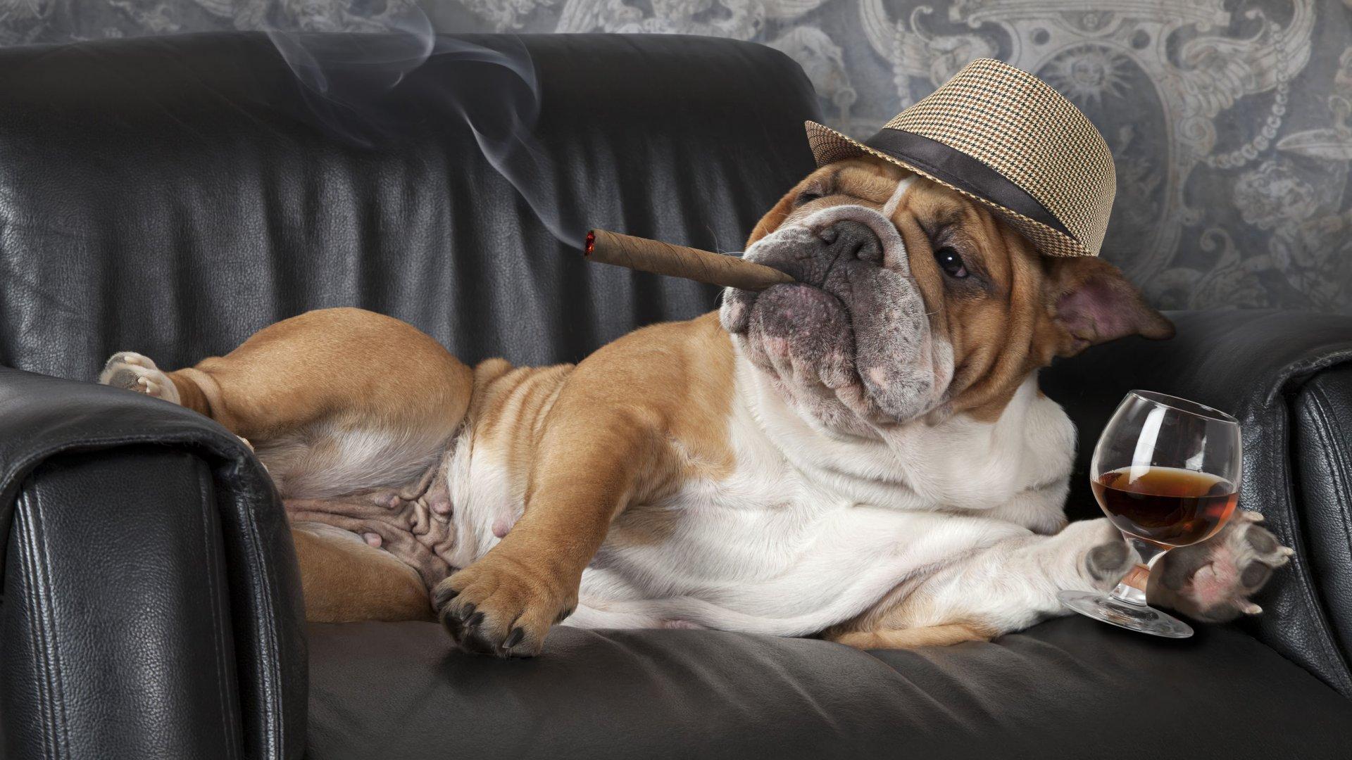 Een optimale gezondheid van je hond begint bij een gezonde levensstijl