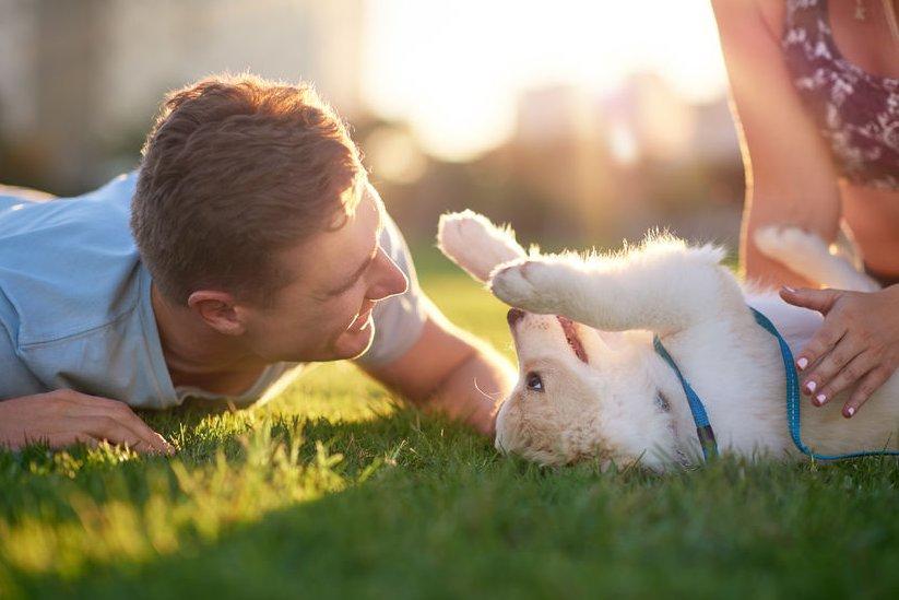 Gezonde voeding voor optimale gezondheid en vitaliteit van je hond: voorkom en genees van kwalen en ziekten door goede voeding