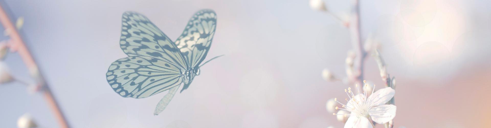 spirituele betekenis vlinder