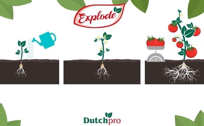 Explode Dutchpro Nutrients