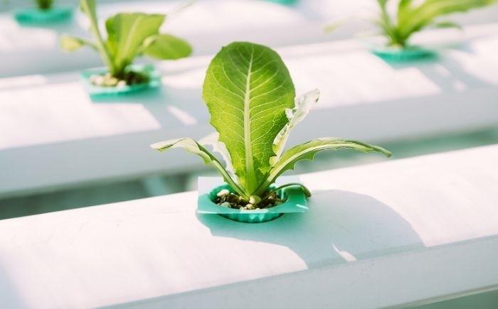Dutchpro Grow AB Hydro/Coco