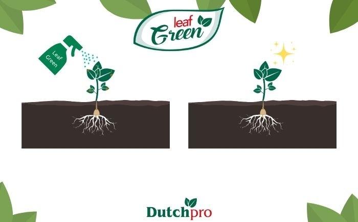 Leaf Green Dutchpro Nutrients