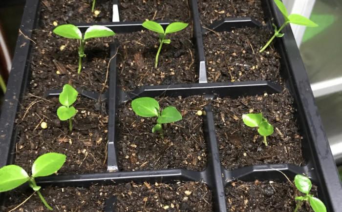 Dutchpro AB Grow Soil