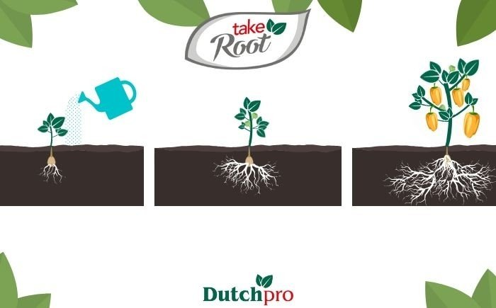 Take Root Dutchpro Nutrients