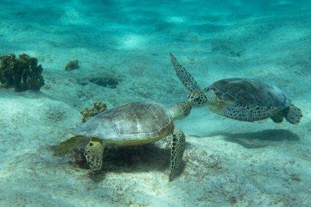 Snorkelen met de scholdpadden