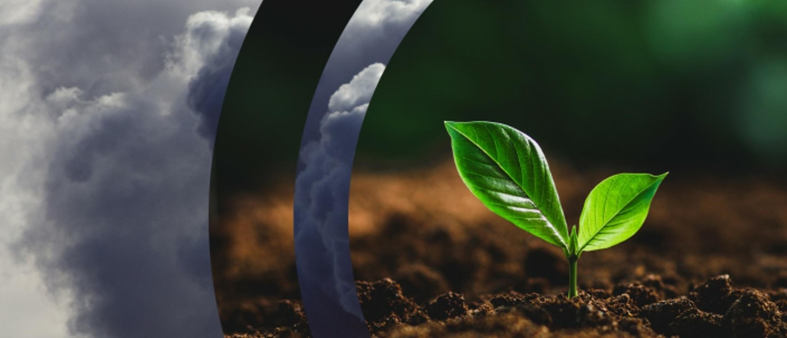 DSM zet verder in op duurzame bedrijfssector