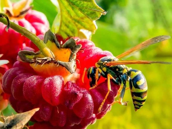Bijen in Nederland