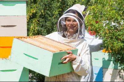 bijen informatie