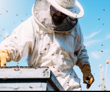 Bijen inNederland