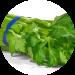 bleekselderijsap-van-de-juicebrothers