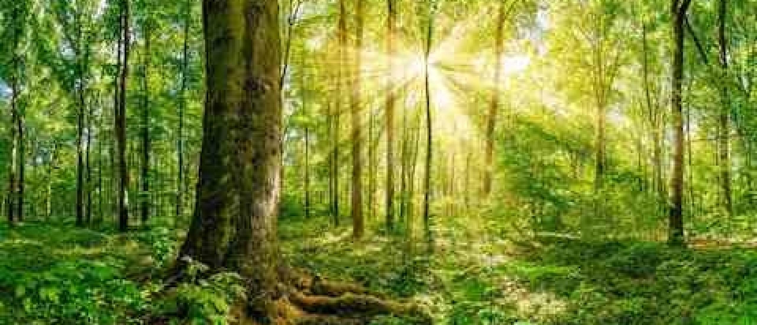 Waarom duurzaam leven?
