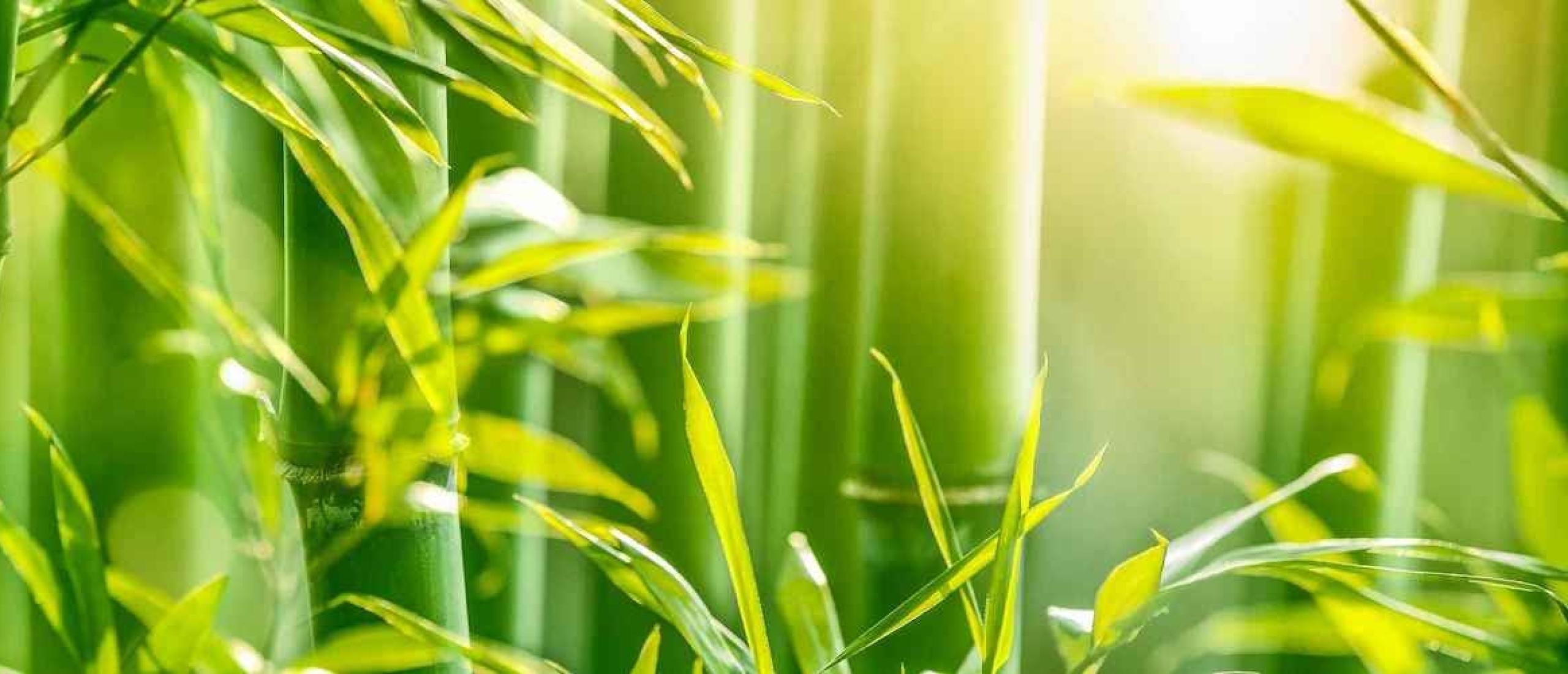 Glazen poleren met de bamboe droogdoek