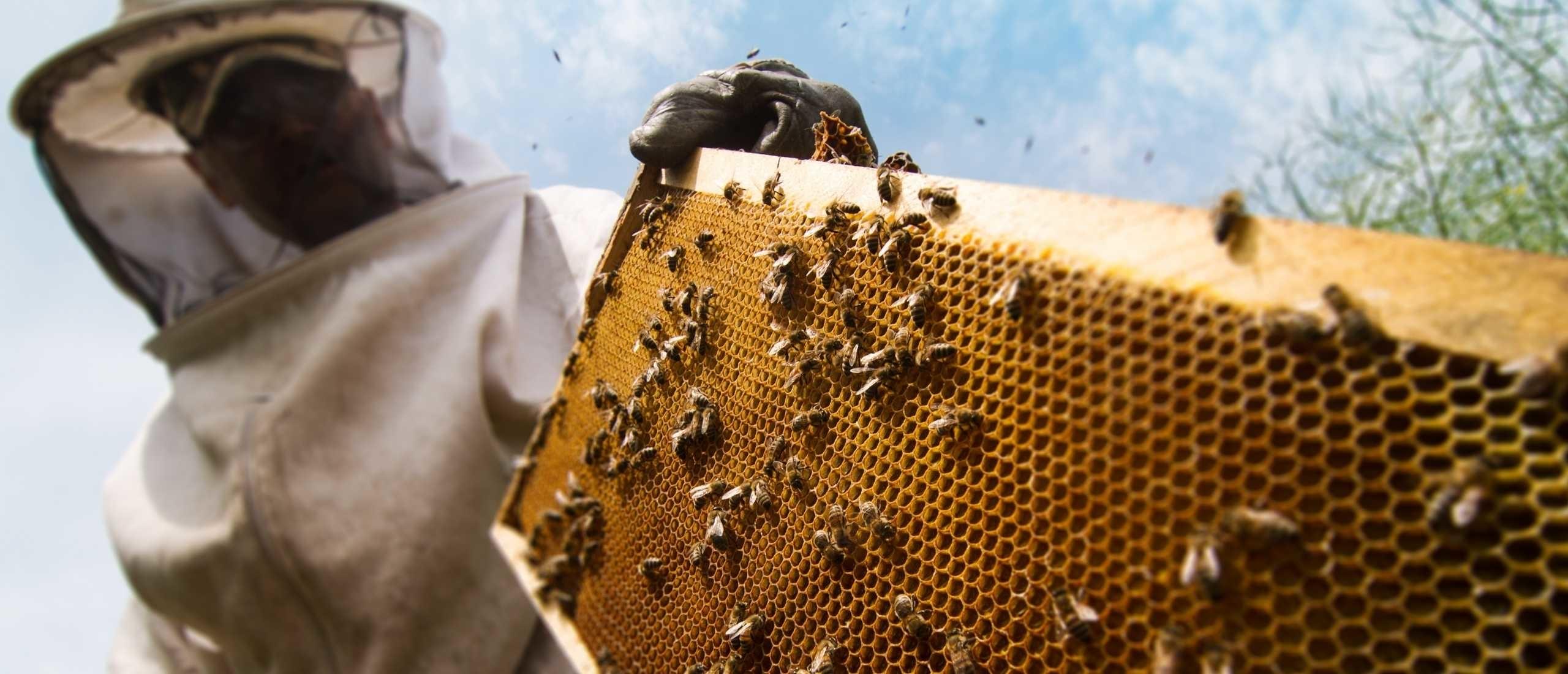 Zelf bijen houden in eigen tuin