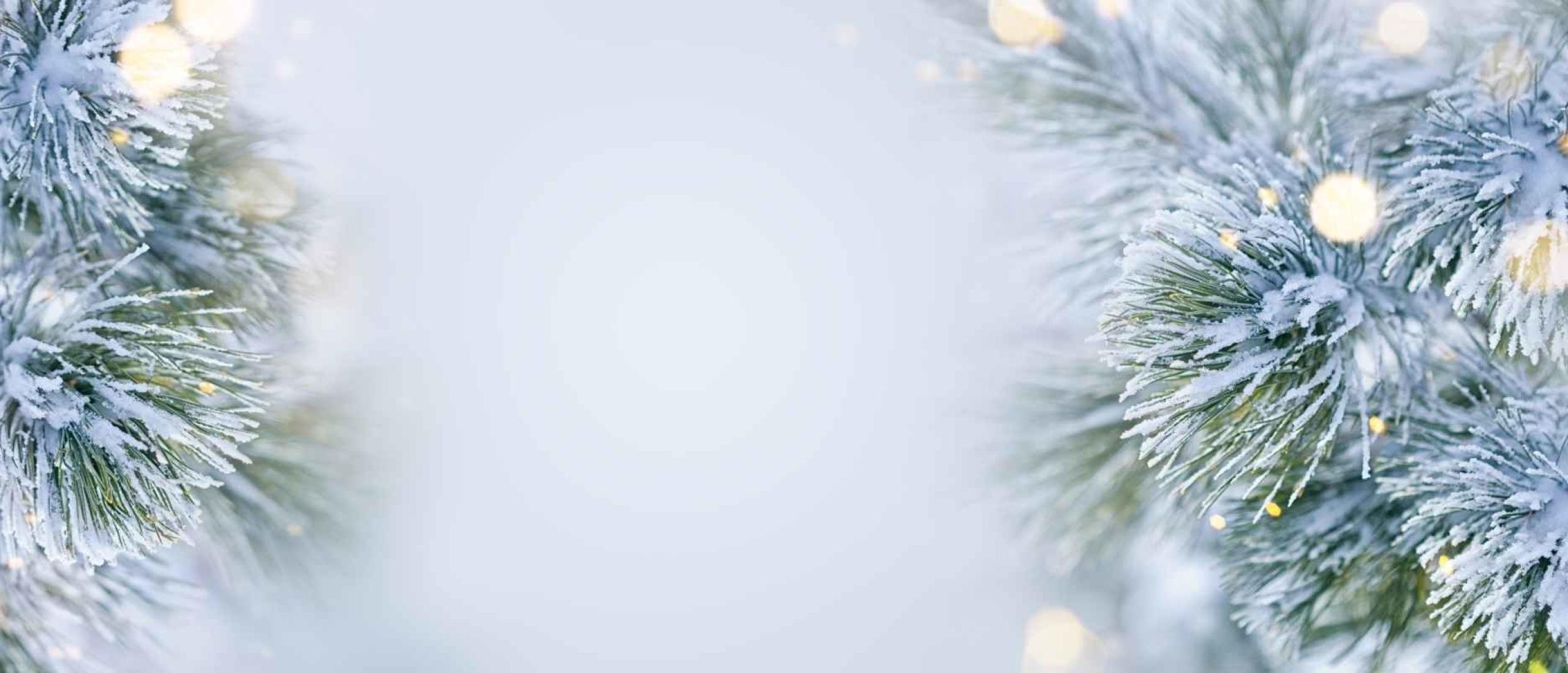 Kunstkerstboom of echte kerstboom; wat is een duurzame kerstboom?