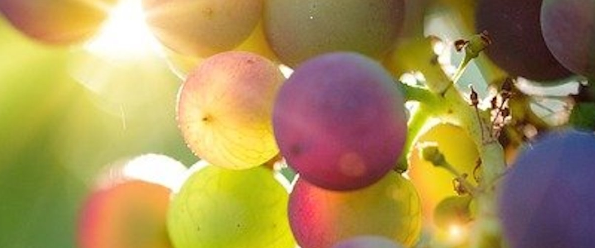 Wat is natuurwijn?
