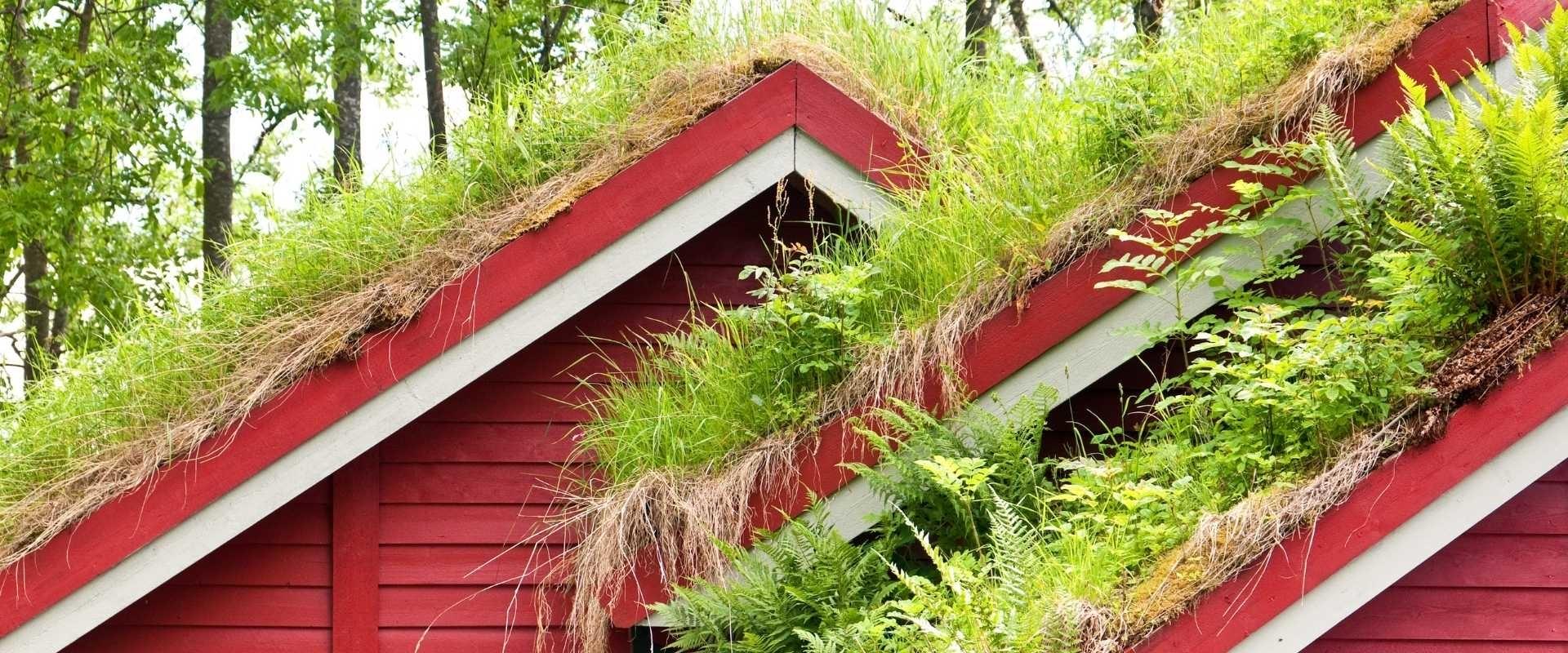 Het gras op het dak is altijd groener