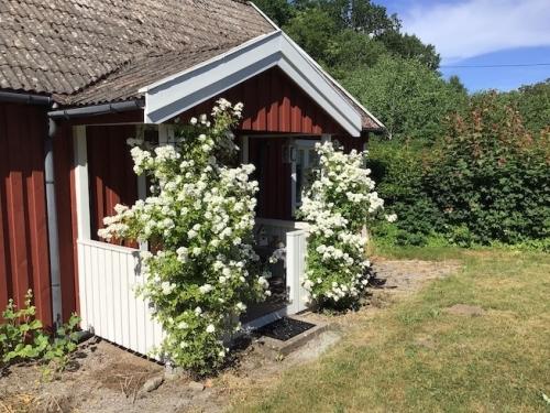 vakantiehuis zweden met hond
