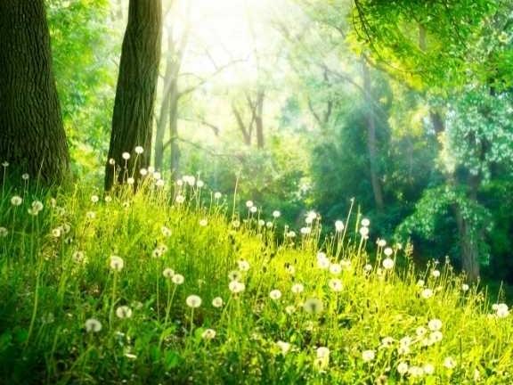 verkleinen-van-je-ecologische-voetafdruk