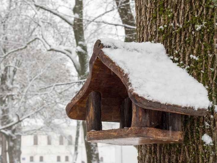 vogels bijvoeren in de winter