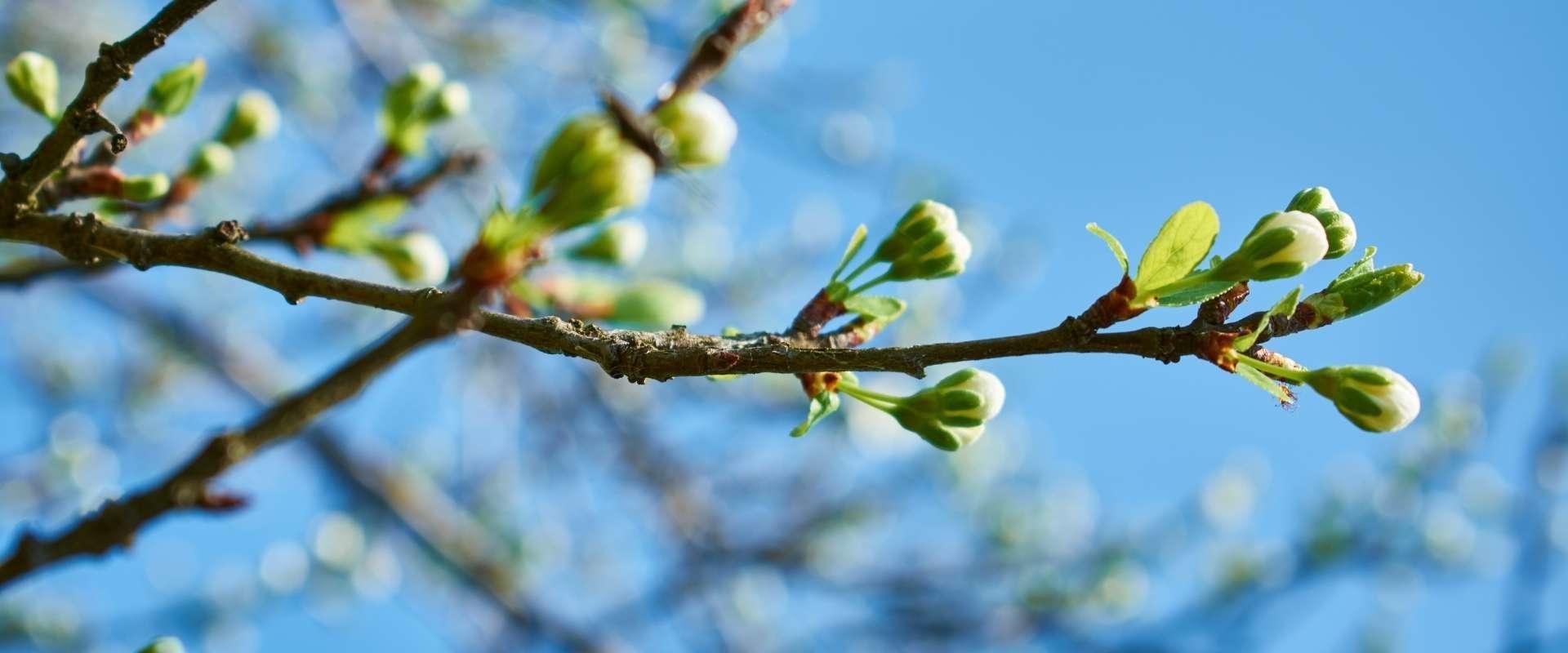 Voorjaar in aantocht!