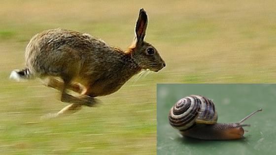 Ben je een haas of een slak?