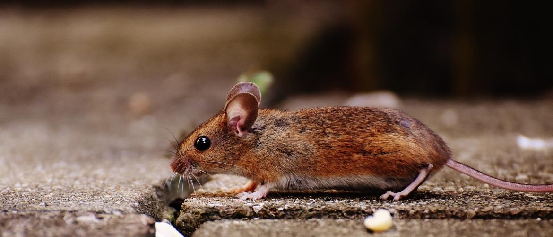 Hoe een rat nieuwe deuren opent | Een rat in de camper