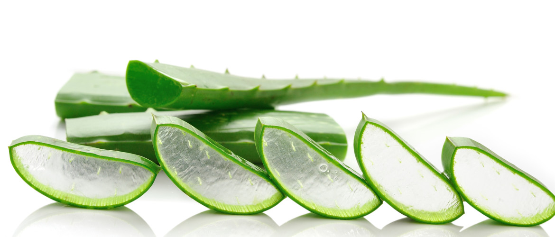 Aloë vera: goed voor je huid en darmen maar ook voor je bloedsuikerspiegel!