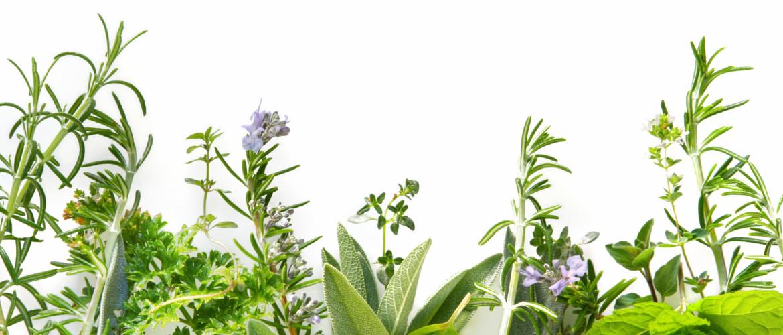 Detoxen met kruiden; afvalstoffen afvoeren met dagelijkse kruiden uit je keuken