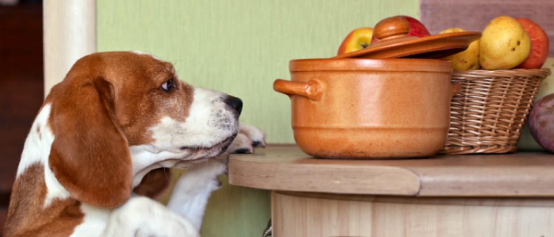 Extreem hongerig voordat je ongesteld wordt? Vijftien tips!