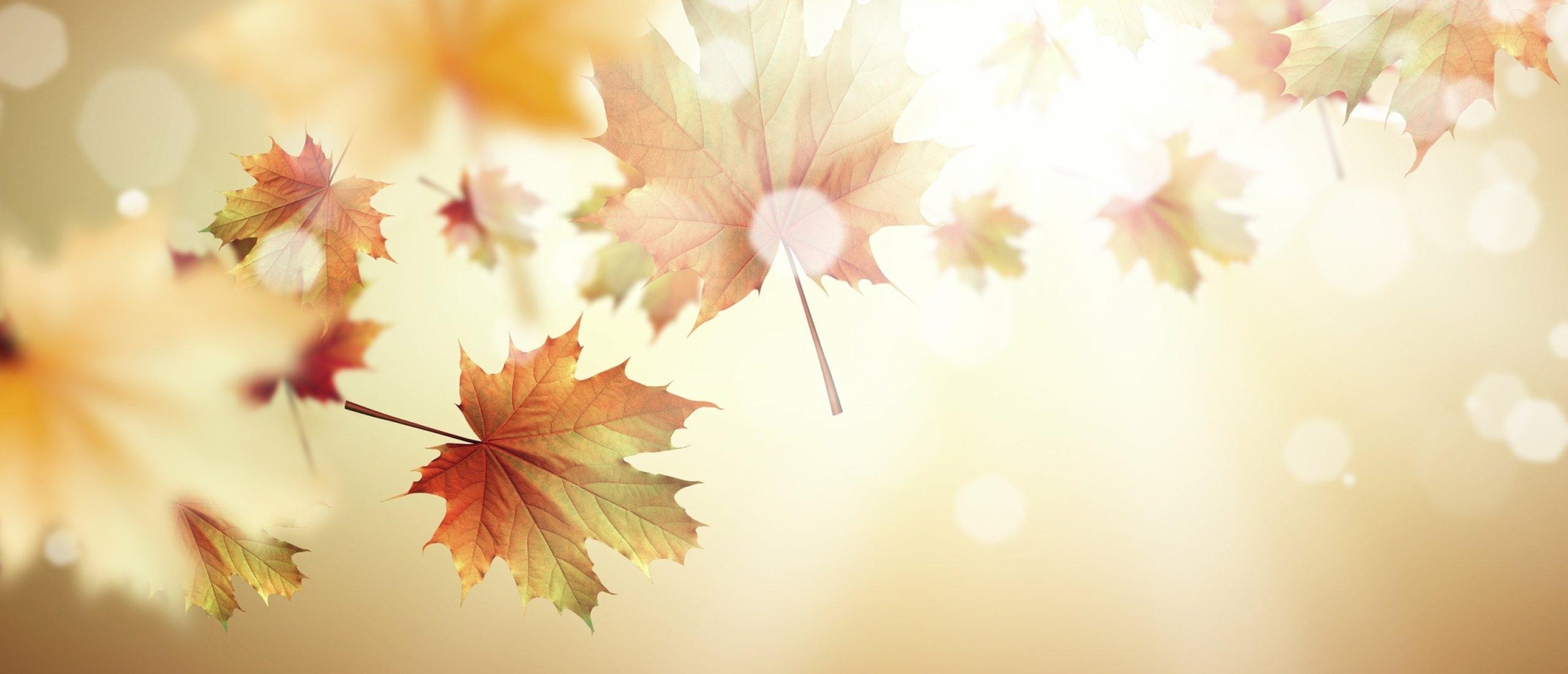 Herfst opkomst? Ondersteun je immuunsysteem en denk vooral aan antioxidanten